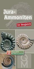Jura-Ammoniten