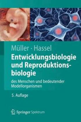 Entwicklungsbiologie und Reproduktionsbiologie des Menschen und bedeutender Modellorganismen