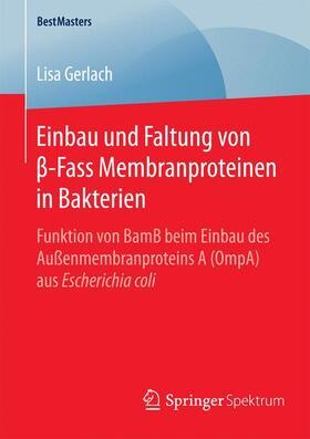 Einbau und Faltung von ß-Fass Membranproteinen in Bakterien