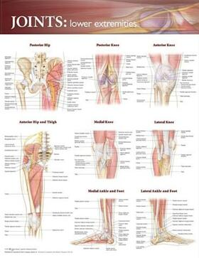 Joints of the Lower Extremities Anatomical Chart | Sonstiges | sack.de