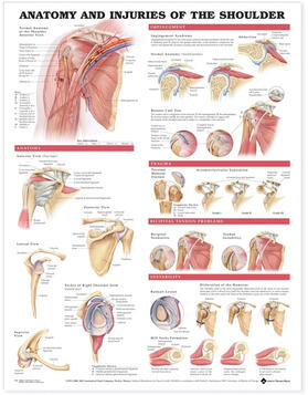Anatomy and Injuries of the Shoulder Anatomical Chart | Sonstiges | sack.de