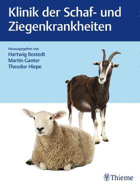 Bostedt / Ganter / Hiepe | Klinik der Schaf- und Ziegenkrankheiten | E-Book | sack.de