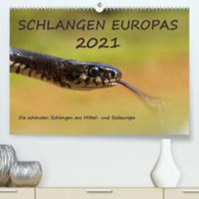 Simlinger   Europäische Schlangen (Premium, hochwertiger DIN A2 Wandkalender 2021, Kunstdruck in Hochglanz)   Sonstiges   sack.de