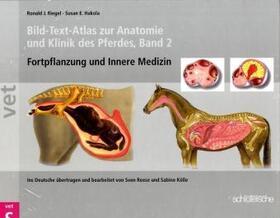 Hakola / Riegel | Bild-Text-Atlas zur Anatomie und Klinik des Pferdes. Bd.2 | Buch | sack.de