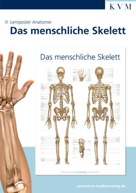 Lernposter Anatomie | Sonstiges | sack.de